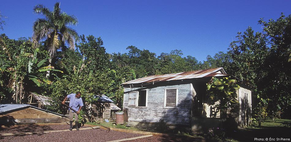 Francisco Antonio, membre de la Conacado en République Dominicaine, racle ses fèves de cacao équitables et biologiques.©EricStPierre