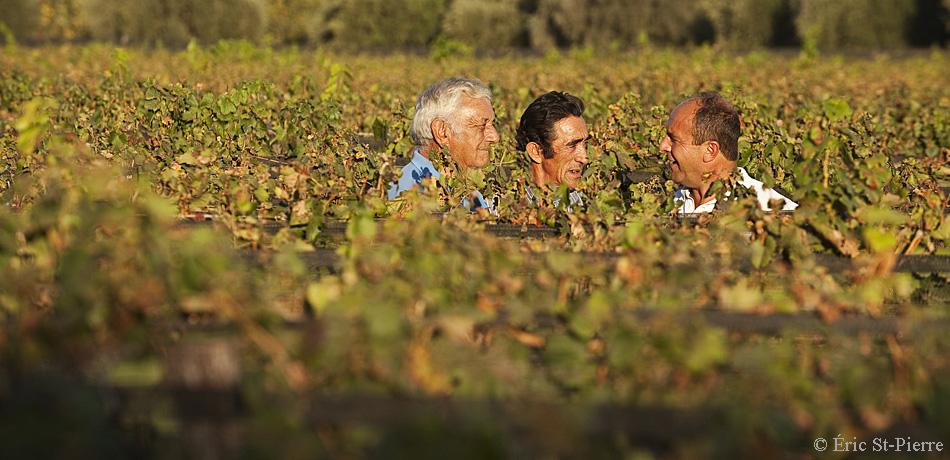 Osvaldo, Antonio et Eduardo, trois membres de Viñasol au milieu des vignes de Malbec. ©Éric St-Pierre